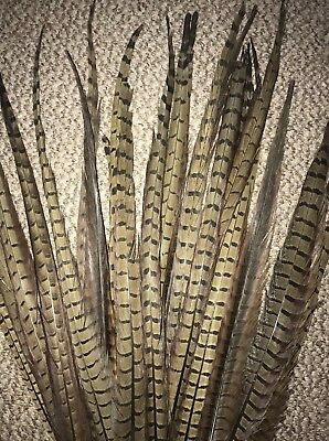 Natural Ringneck Pheasant Tail Feathers