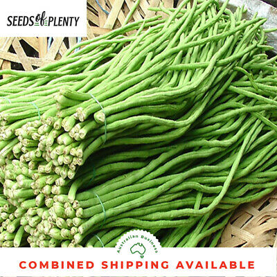 SNAKE BEAN - Red Dragon (35 Seeds) SUPER LONG BEANS Asian Vegetable