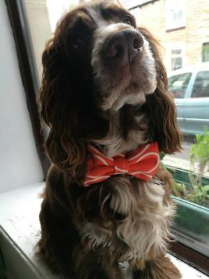 Padded Dog Collar Bow - handmade in Orla Kiely fabric