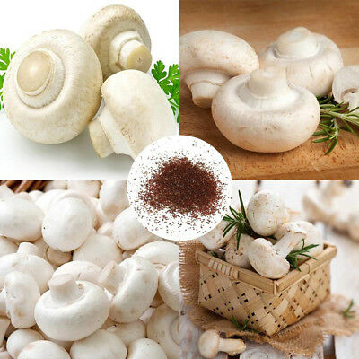 50Pc White Button Mushroom Seeds Garden Courtyard Delicious Vegetable Plant Orna