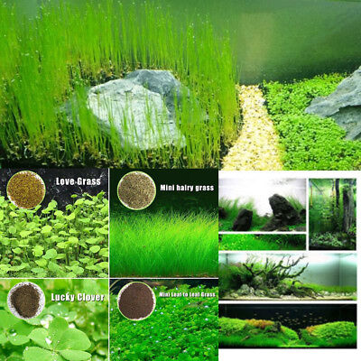 10g Fish Tank Aquarium Live Plant Seeds Aquatic Water Grass Decor Foreground New