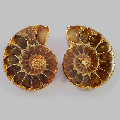 1 Matched Pair 2 Pcs Natural Ammonite Fossil Cabochon Gemstone 27x21x7 mm 50 Cts