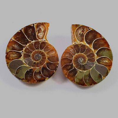 1 Matched Pair 2 Pcs Natural Ammonite Fossil Cabochon Gemstone 26x21x6 mm 46 Cts