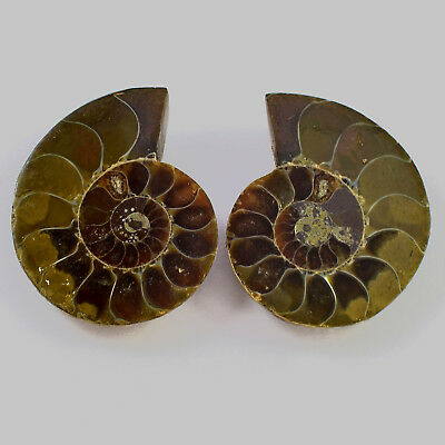 1 Matched Pair 2 Pcs Natural Ammonite Fossil Cabochon Gemstone 28x23x6 mm 60 Cts