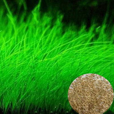 Green Fish Tank Aquarium Plant Seeds Aquatic Water Grass Foreground Plants Decor