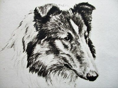 Rare Fine Etching Of A Collie Dog David Gee