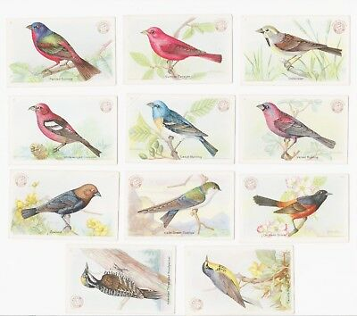 11 Useful Birds of America CARDS:11 CARDS Series 3 1922 Antique Arm & Hammer