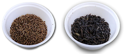 10,000 small black soldier fly larvae & 500 large prepupae (The compost PIRANHA)