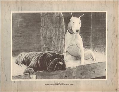 Vintage At The Show  English And Bull Terrier  George Ford Morris 1952 Print