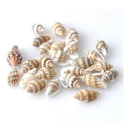 Mini Craft Shells 13-16mm with Hole for Threading, Kid's Craft Activities, Je EL