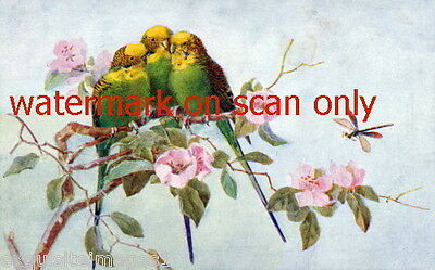 Antique Art~ Three Green Parakeets~ Flowers~Budgerigars~NEW Lge Note Cards