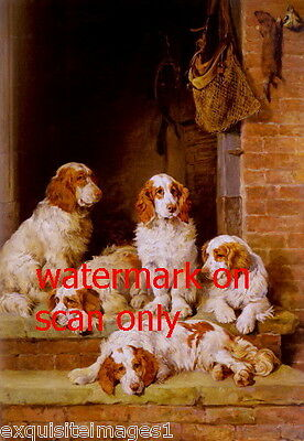 c1900 Five Beautiful Welsh Springer Spaniel Puppy Dog Dogs~NEW Large Note Cards