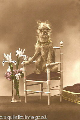 c1900 Tinted Photo~Brussels Griffon Puppy Dog on Chair~Flowers~NEW Lg Note Cards