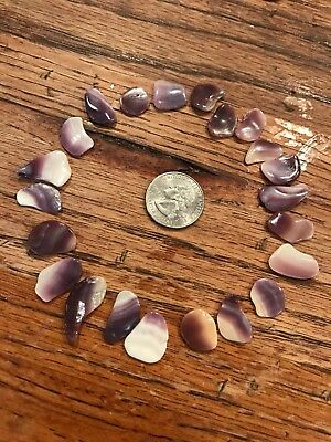 Wampum Quahog Shells Small Size Glossed Purple Clam Shell Lot of 22 W42