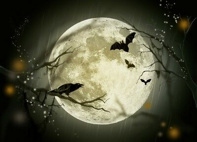 CROW SILHOUETTE MOON BLACK GREY PHOTO ART PRINT POSTER PICTURE BMP1006A