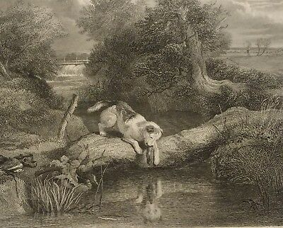 1800s folio photogravure -  DOG AND THE SHADOW-etching antique art print