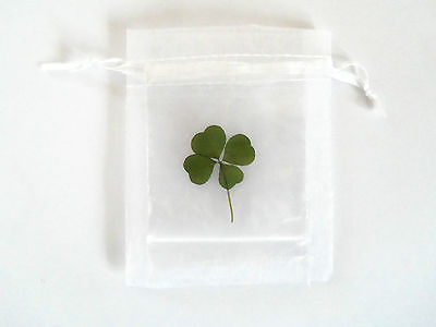 genuine real four leaf clover lucky clover  wedding favour certificate included