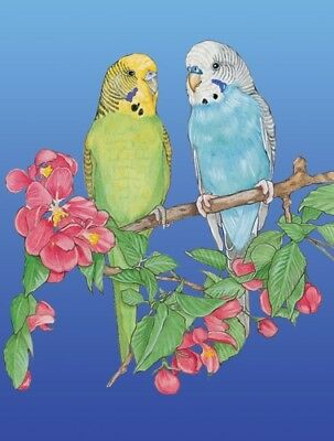 Parakeet Blank Note Card