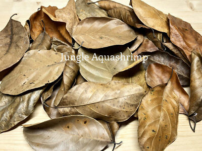 Dried Jackfruit Leaves BioFilm Discus Betta Crystal Red Cherry Shrimp Aquarium