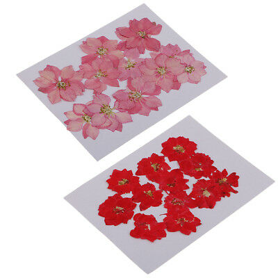 24pcs Natural Pressed Dried Flowers for Resin Molding Decors Jewelry Making