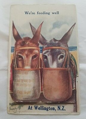 vntg The Pocket Novelty Card postcard Donkeys We're Feeding Well Wellington N.Z.
