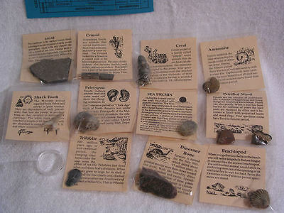 Fossil collection 10 REAL fossils from various geological time with info & lens