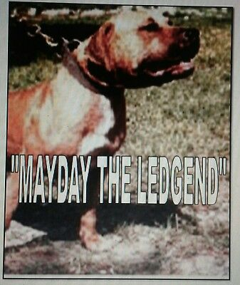 Mayday The Ledgend Pit Bull Book