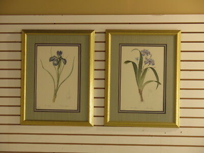 LF28164EC:  Pair Of Framed & Matted Iris Floral Decorative Prints