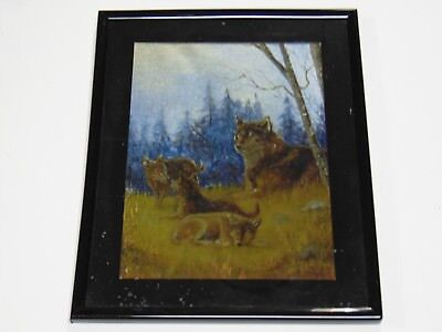Wolf Dog Family in woods pine trees country western art FOIL PRINT vintage