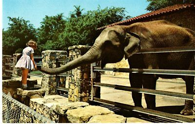 Jackson, MS - Elephant at Livingston Park Zoo Postcard
