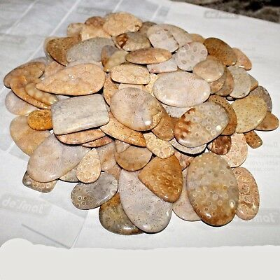Best Wholesale Lot 250.00 Ct Natural Fossil Coral Multi Shape Cabochon Gemstone