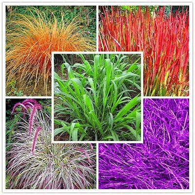 200pc Chinese Perennial Grass Seeds Home Garden Decoration