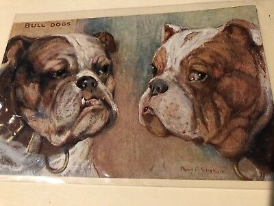 Tuck's Post Card Series 9534 Types Of Canine Beauty Oilette Bulldogs