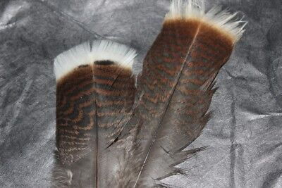 Fly Tying Turkey Tail feathers J8