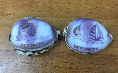 2 Awesome Painted Etched Bermuda Sea Shells