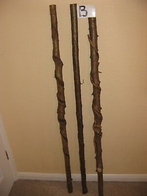 Three new twisted hazel walking stick shanks seasoned and steam straightened