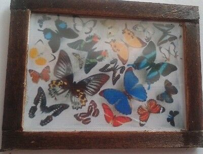 Dolls House Butterfly collection picture