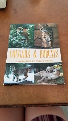 1991 Cougars and Bobcats A Collection of  12 Prints (postcards)