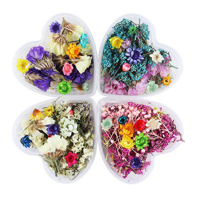 Real Dry Dried Flower Nail Art 3D UV Gel Acrylic Decor DIY Salon  Tips