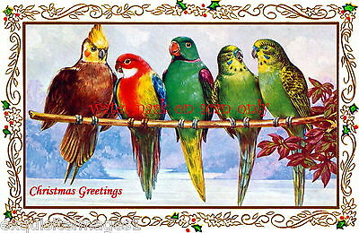 Antique Christmas Art Nouveau Border~Parakeets~Cockatiel~Lovebird~NEW Note Cards