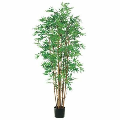 5' Japanese Bamboo Silk Tree w/Pot -2,400 Leaves (pack of 2)