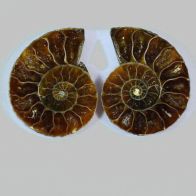 Natural Ammonite Fossil Cabochon Gemstone 30x22x5 mm 42 Cts 1 Matched Pair 2 Pcs