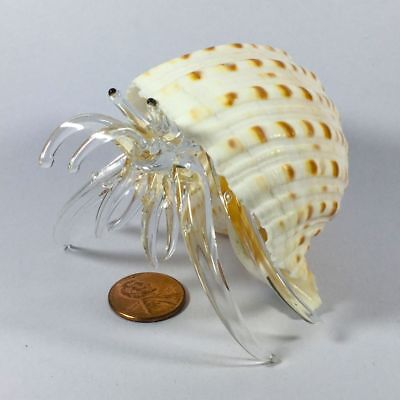 Art Figurine Hand Blown Glass Real Sea Shell Hermit Crab Animal Large Size #007