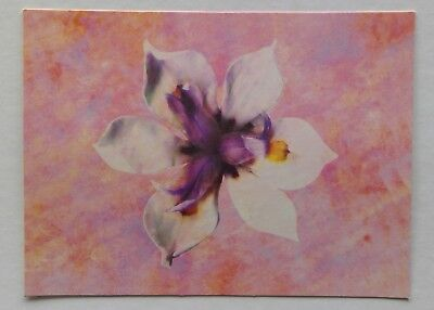 White Blossom by Don Bishop Postcard (P343)