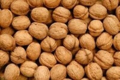 Australian Walnuts In Shell 3Kg - Free Post (Excellent For Snacking!)