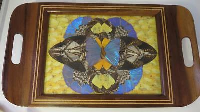 Brazilian Art Deco Exotic Wooden Butterfly Wing Tray Wall Hanging