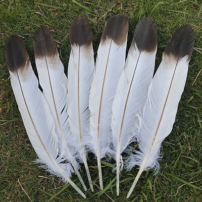 Beautiful 5/10/50pcs Natural pheasant feathers 45-50 cm/18-20 inches decoration