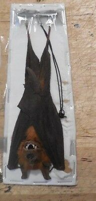 Hanging Hipposideros Larvatus Leaf Nosed Bat Indonesian Taxidermy Fast Ship