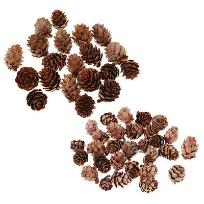 50x Assorted Size Best Pinecones Pine Cones Rustic Style Decor for Christmas