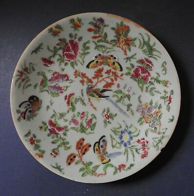 Chinese Celadon Ground Famille Rose Porcelain Large Plate - Mid 19Th Century